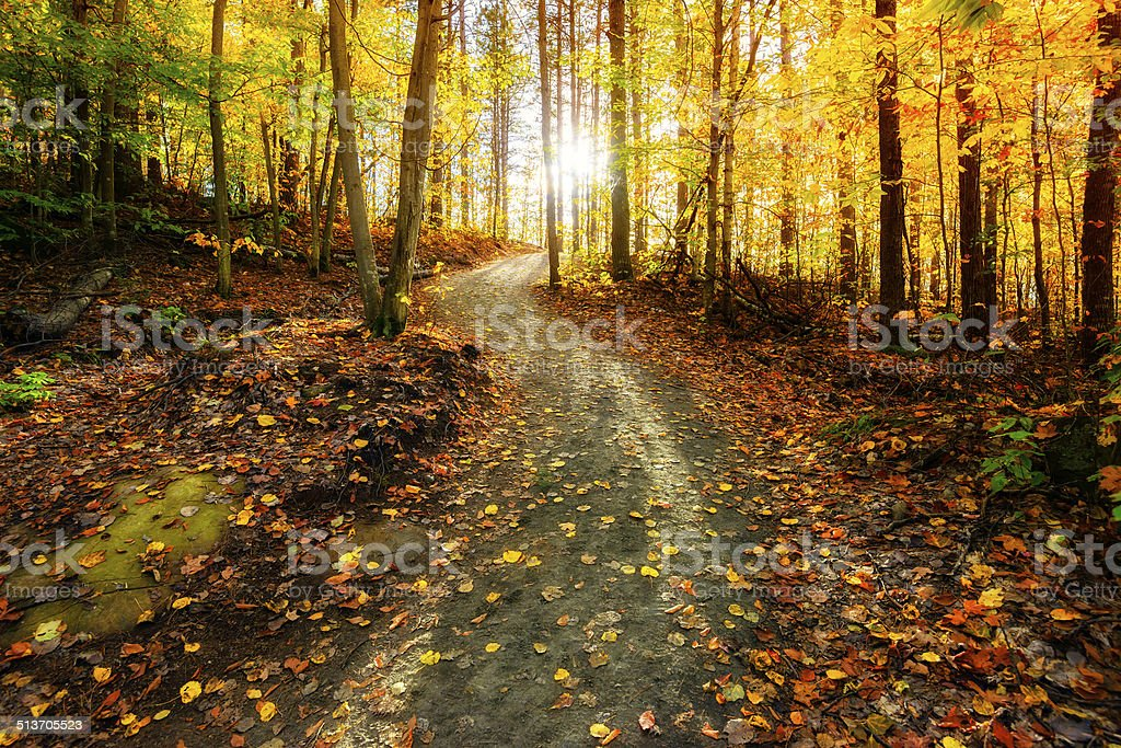 Sun Shining Down the Golden Forest Path stock photo