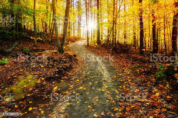 Photo of Sun Shining Down the Golden Forest Path