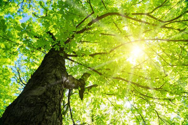 Sonne im Wald – Foto
