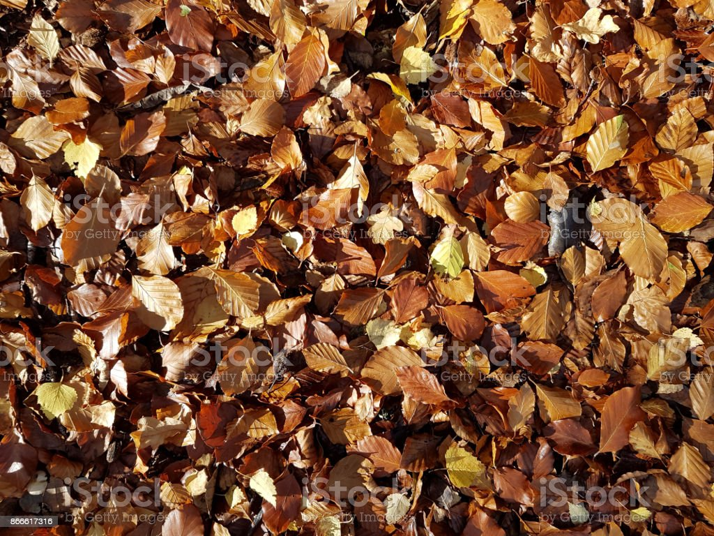 Sun shining on a carpet of mixed autumn leaves stock photo