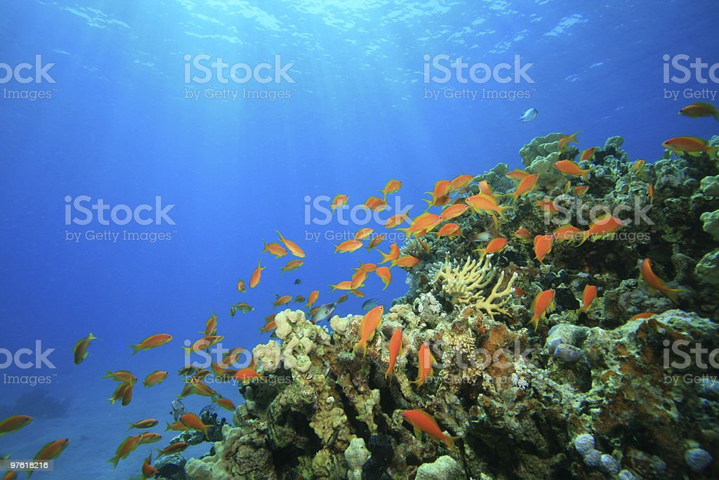 Sun shining on Coral Reef royalty-free stock photo