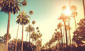 istock Sun shining on palm trees 459470819