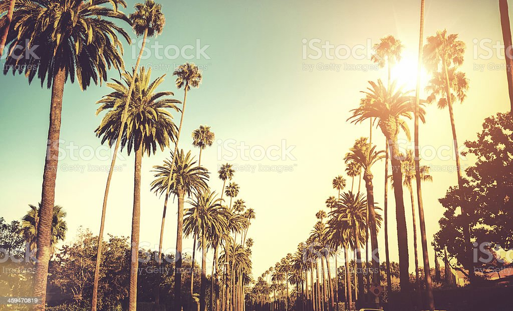 Sun shining on palm trees stock photo