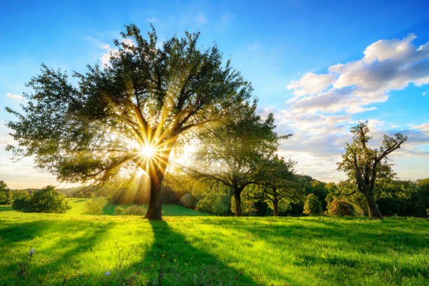 Sun shining through a tree in rural landscape stock photo