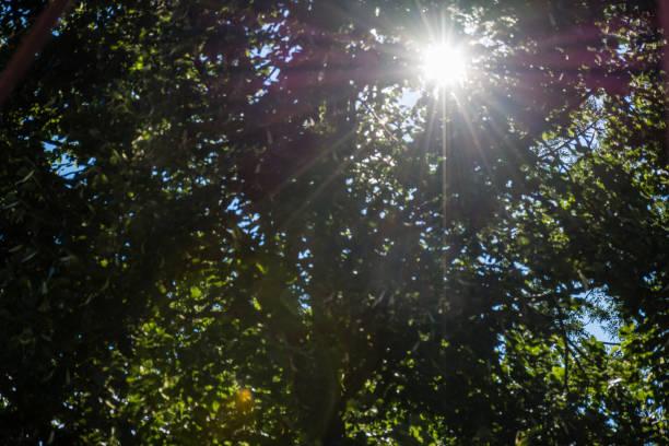 Sonne scheint durch die Blätter – Foto