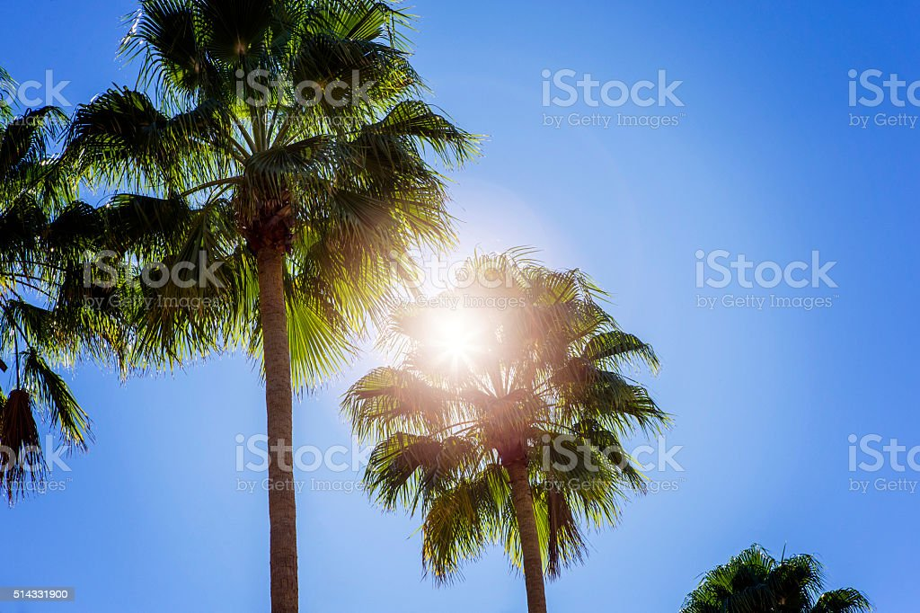 Sun shining through palm trees, on a blue background. stock photo