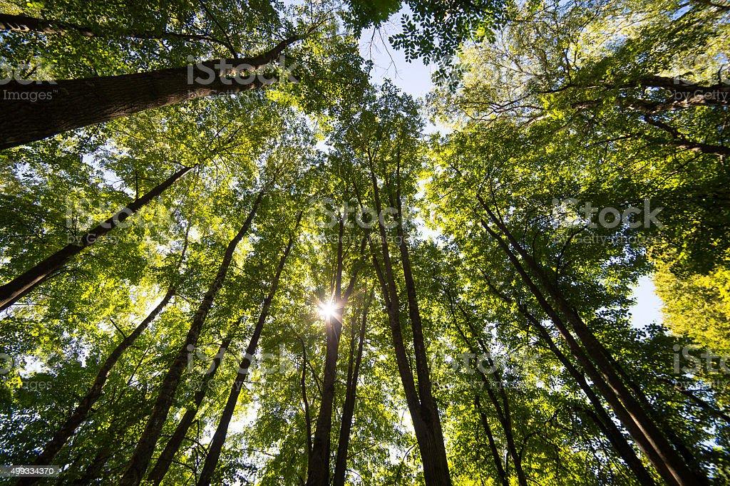 Sun shining through the trees stock photo