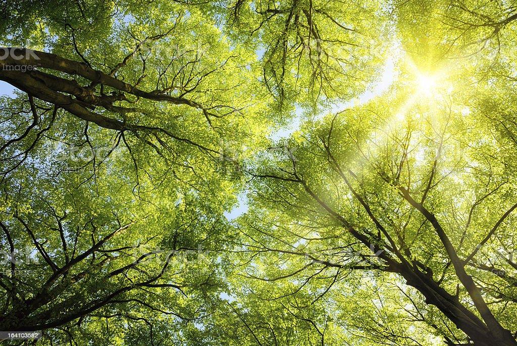 Sun shining through treetops stock photo