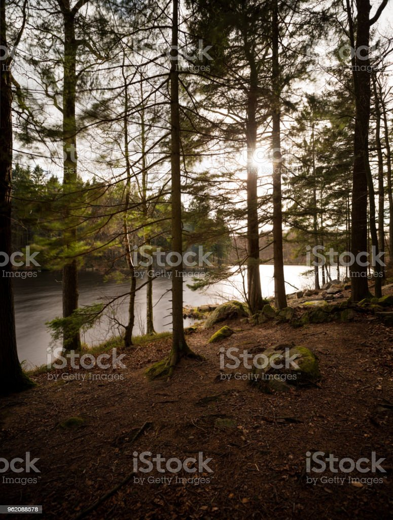 Sun shining thru amazing untouched trees in virgin forest by the lake (XXXLarge) stock photo