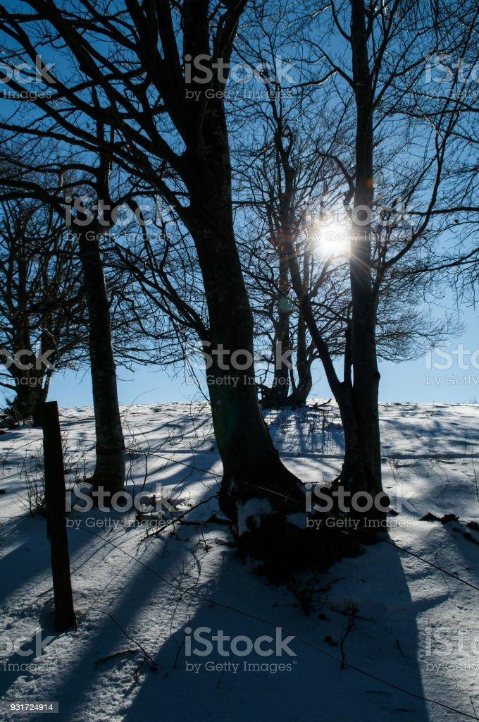Sun shinning through stock photo