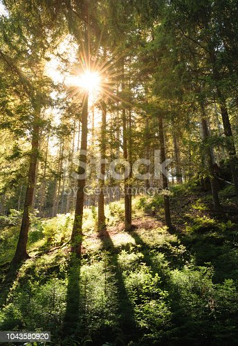 Sun shinning trough the forest