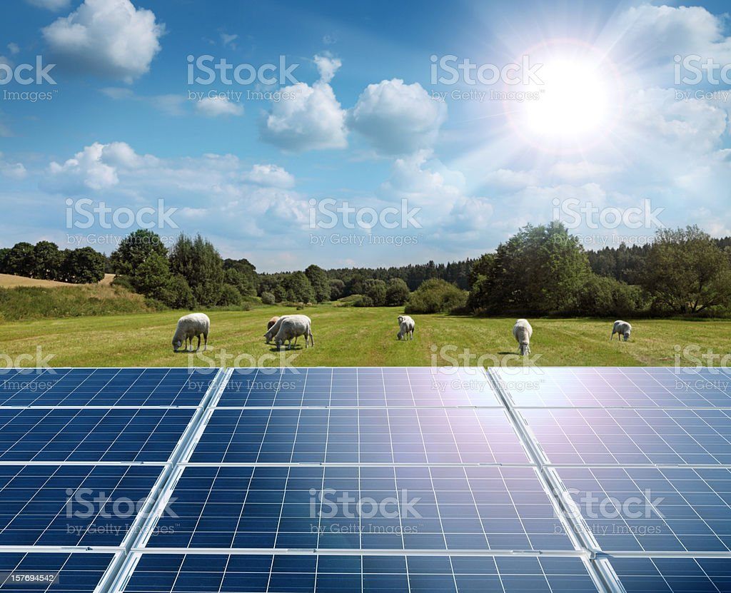 Sun, Solar Panels and Green Field with Grazing Sheep stock photo
