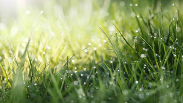Sun spot on lawn stock photo