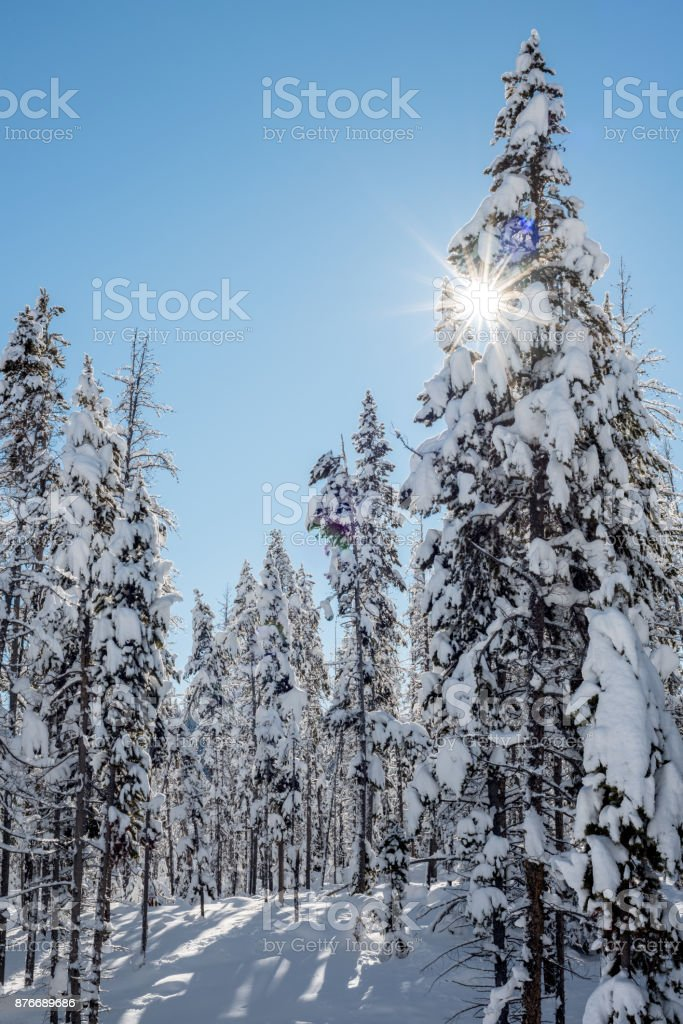 Sun star peaks througth a snow covered winter forest stock photo