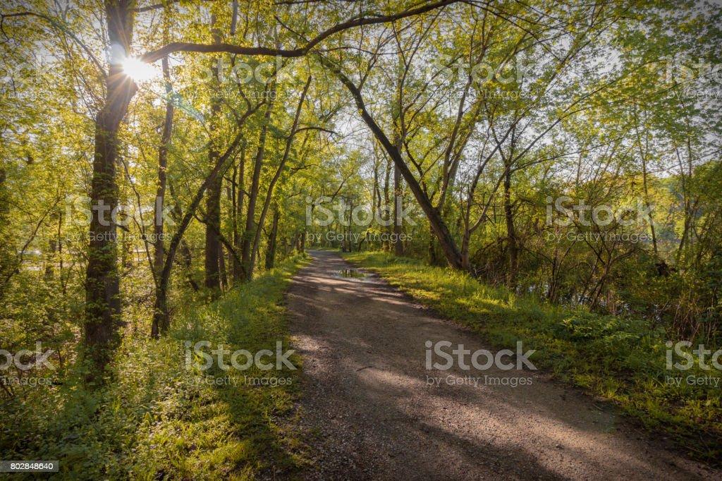 Sun through trees stock photo