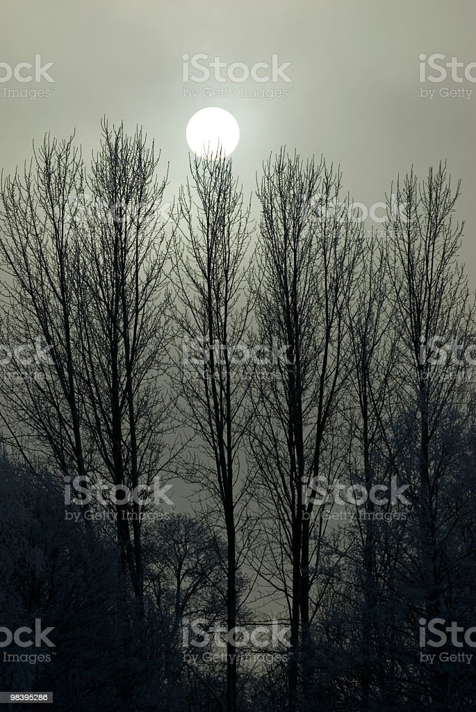 sun with trees royalty-free stock photo