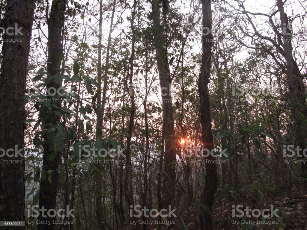 Sun within the trees in Thailand stock photo