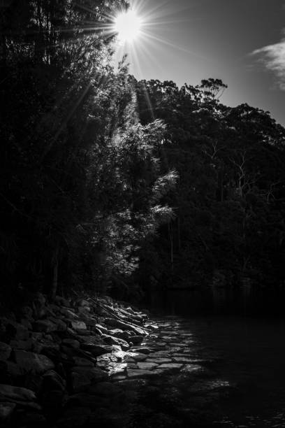 Sun_rays_through_trees_reflecting_onto_water stock photo