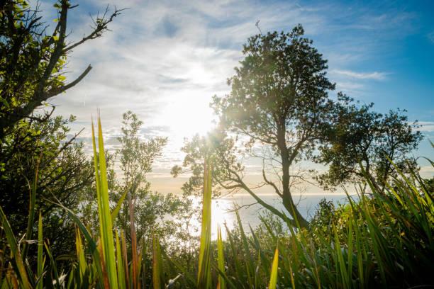 Sun_through_trees_overlooking_sea_morning stock photo