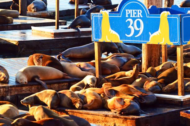 Sonnenbaden Hafen-Siegel – Foto