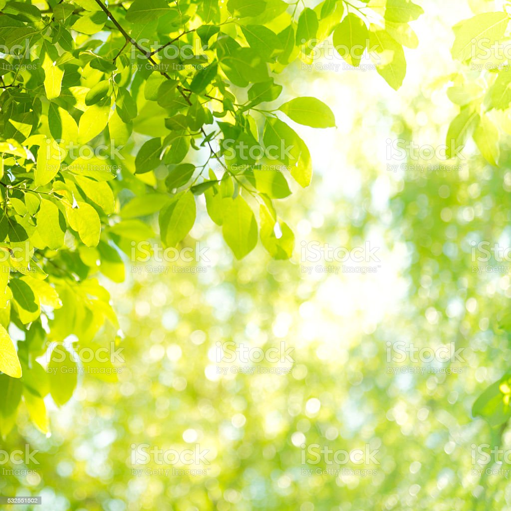 Sunbeam and leaves in the forest stock photo