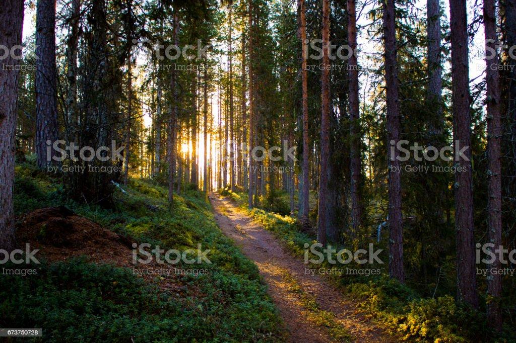 Sunbeam dans la forêt magique photo libre de droits
