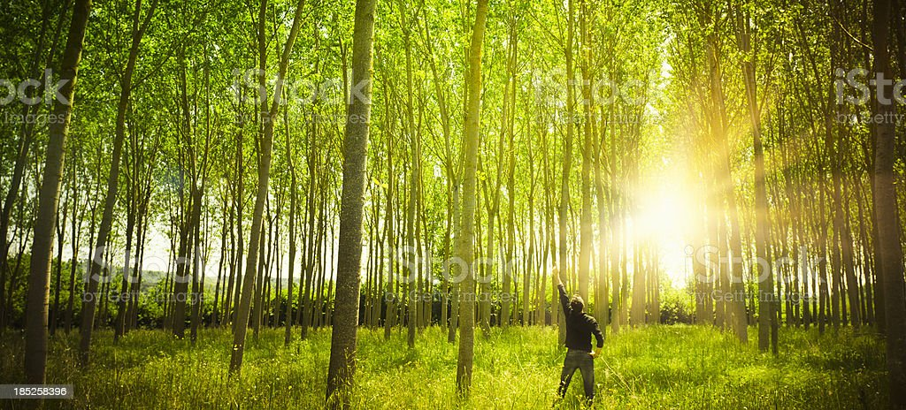 Sunbeam on green spring forest royalty-free stock photo