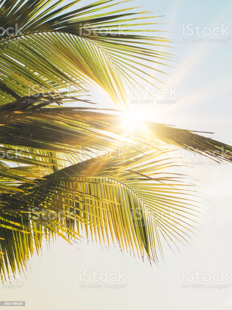 Sunbeam though palm trees in the Caribbean, Mayan Riviera, Mexico stock photo