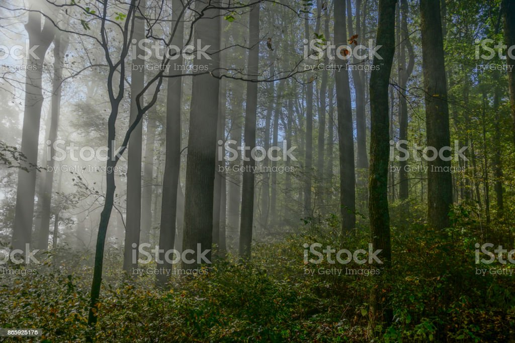 Sunbeams Breaking Through the Canopy in the Blue Ridge Mountains in Virgina stock photo