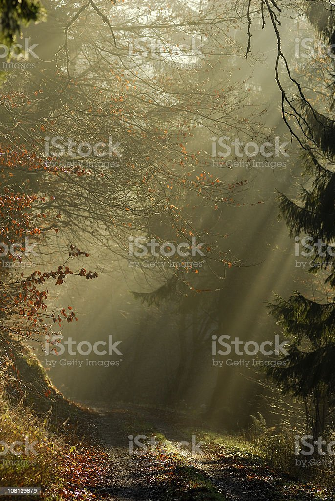 Sunbeams Coming Through Forest On To Path stock photo
