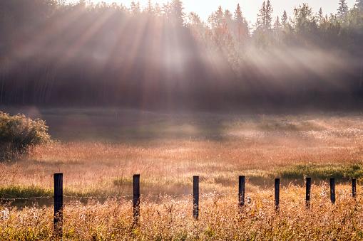 Sunbeams cut through fog in grassy meadow, Parkland County, rural Alberta.