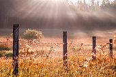 istock Sunbeams cut through fog in grassy meadow, Parkland County, rural Alberta 1222777059