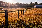 istock Sunbeams cut through fog in grassy meadow, Parkland County, rural Alberta 1222778358