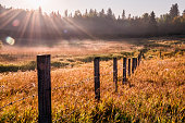 istock Sunbeams cut through fog in grassy meadow, Parkland County, rural Alberta 1222779290