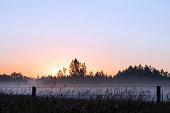 istock Sunbeams cut through fog in grassy meadow, Parkland County, rural Alberta 1222780523