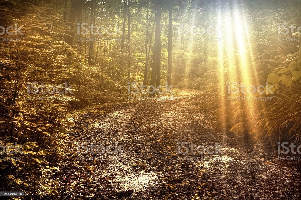 Sunbeams Illuminate A Winding One Lane Forest Road stock photo