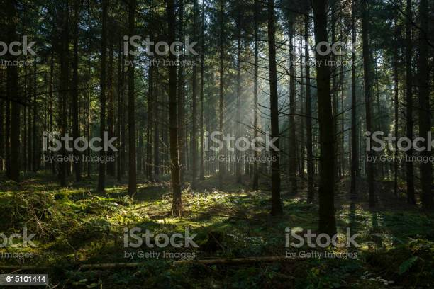 Photo of Sunbeams in dark and foggy autumn forest