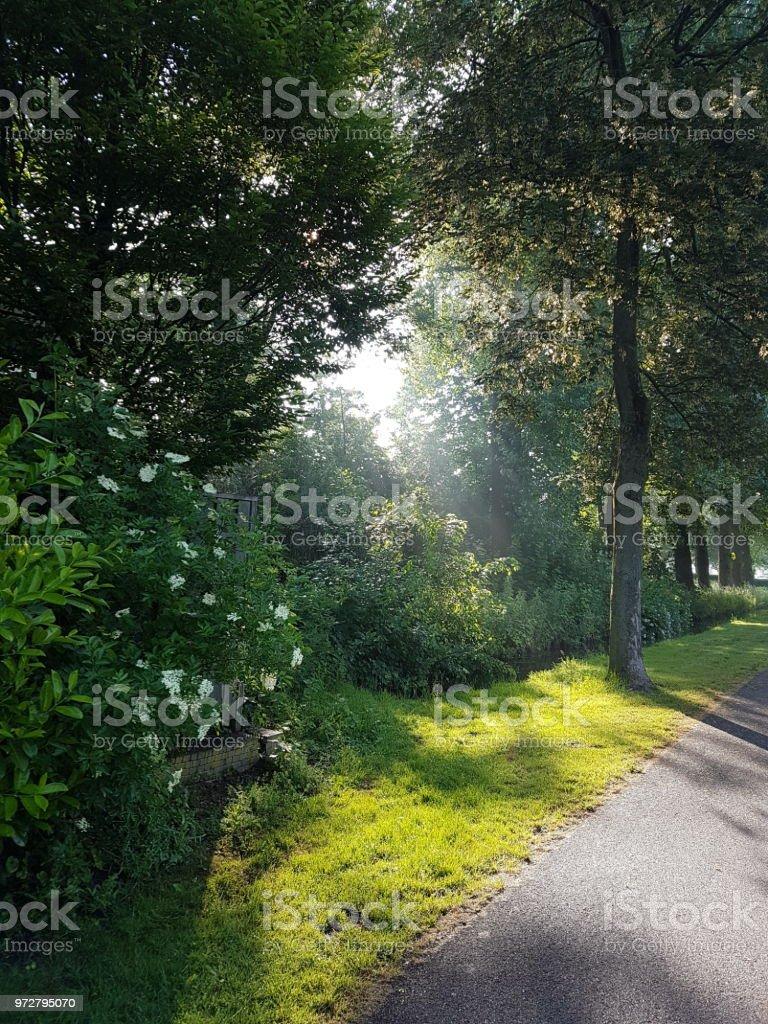 Zonnestralen in de ochtend door de bomen Nieuwerkerk aan den IJssel foto