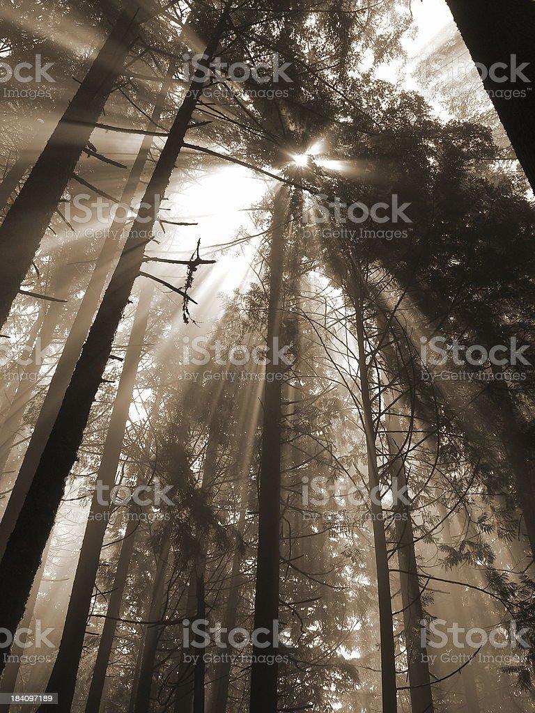 Sunbeams In Vertical Format royalty-free stock photo