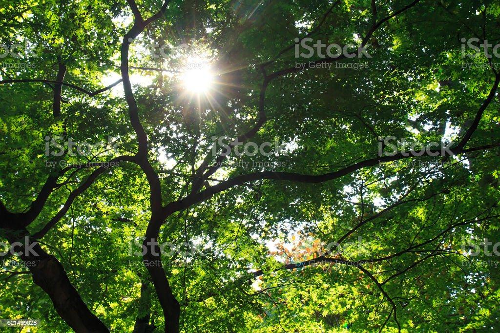 Sunbeams leaves Lizenzfreies stock-foto