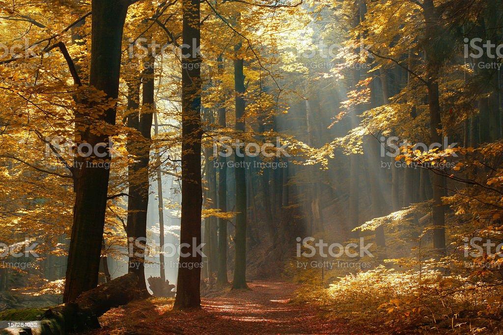 Sonnenstrahlen auf Weg durch Herbstliche Wald mit Leafs Farbe ändern – Foto