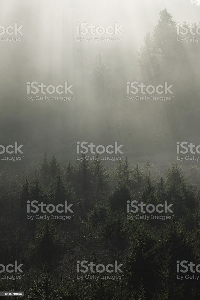 Sunbeams onto the forest stock photo