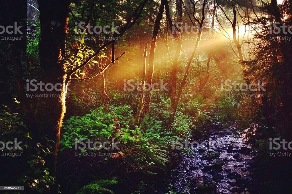 Sunbeams Over Rainforest Creek photo libre de droits