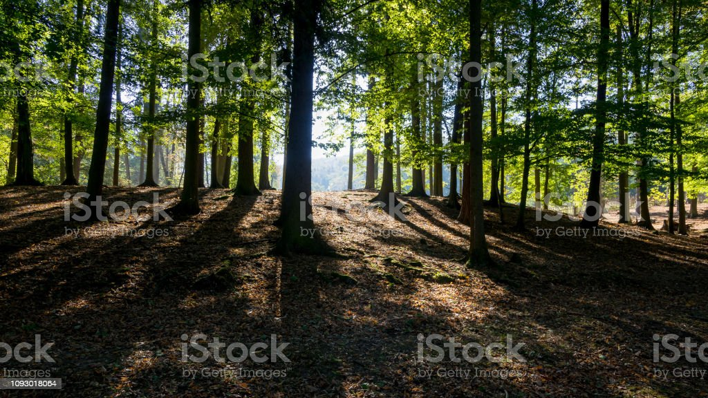Sunbeams passing through the trees stock photo