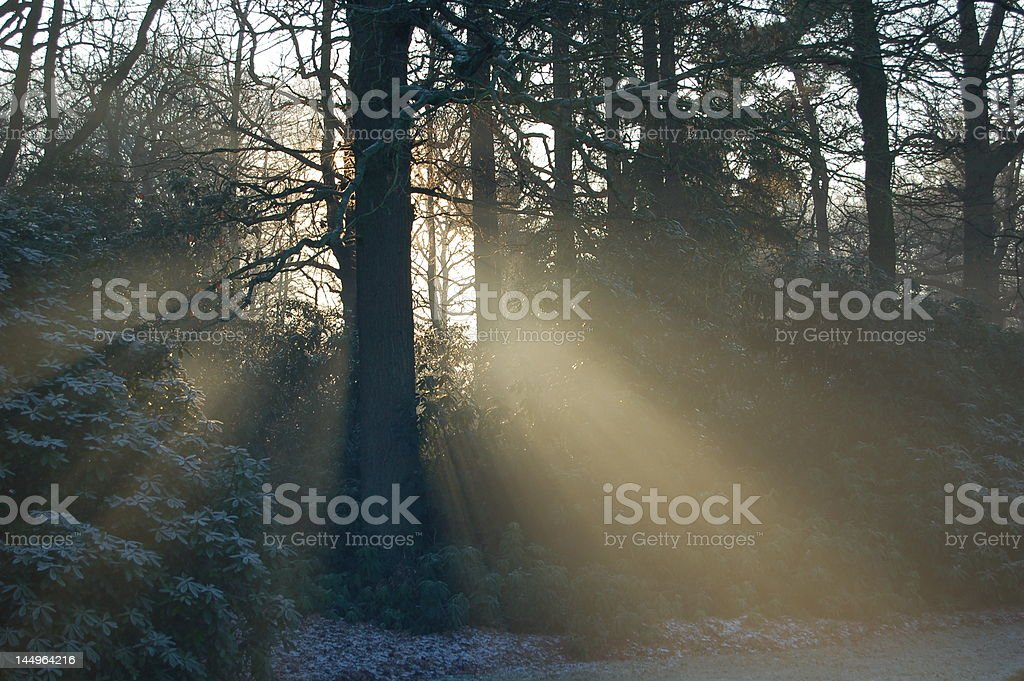 sunbeams stock photo