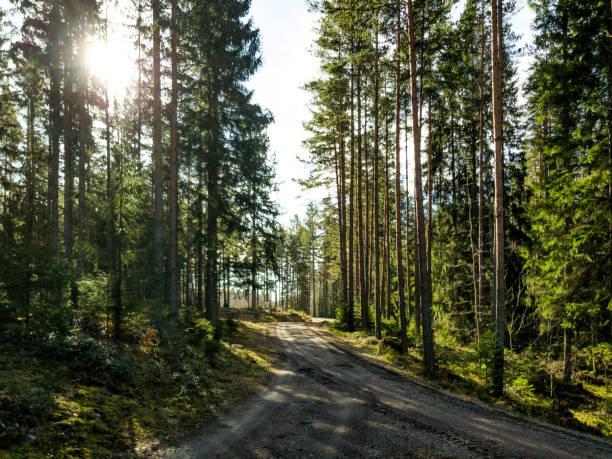 Solstrålar som skiner mellan träd i vacker skog i Sverige bildbanksfoto
