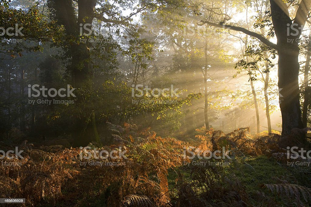 Sunbeams Through Early Morning Mist stock photo
