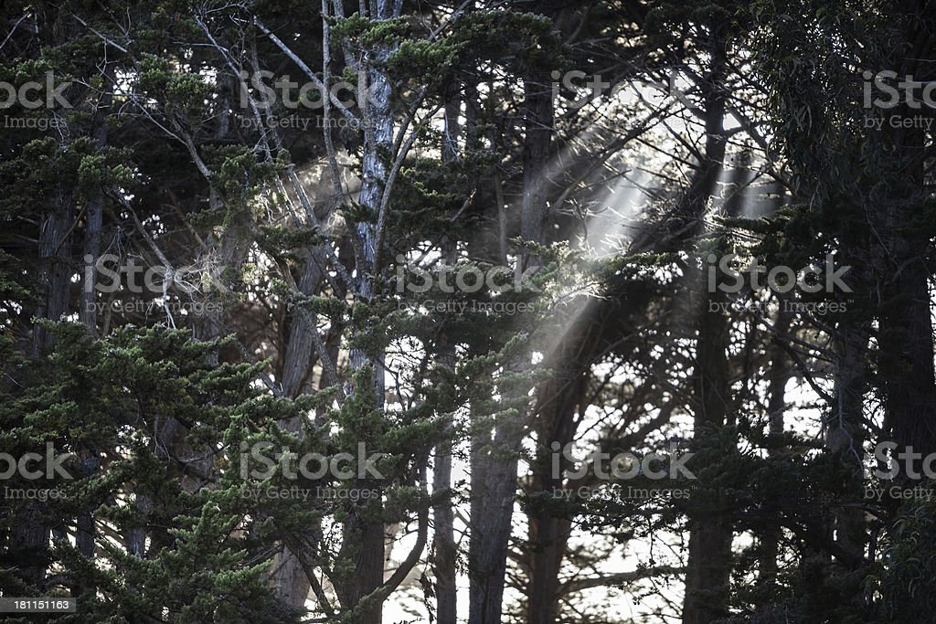 Sunbeams through the forest fog. royalty-free stock photo
