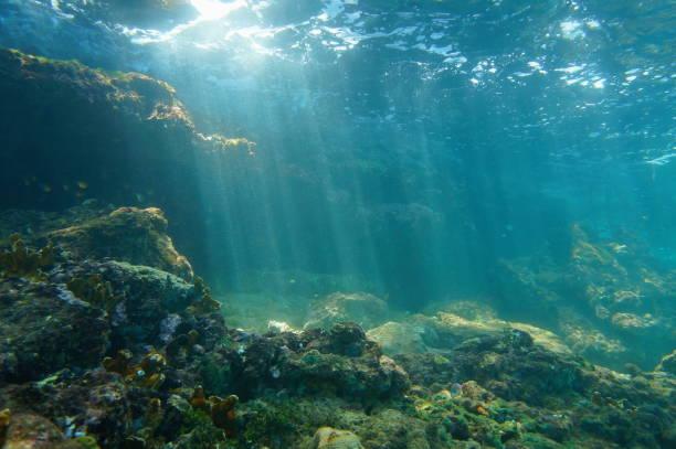 Vu sous l'eau du fond de la mer dans un récif de rayons de soleil - Photo