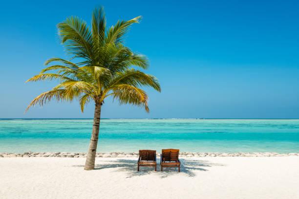 baum im sun island resort, nalaguraidhoo, sonnenliegen und palm island malediven - idylle stock-fotos und bilder